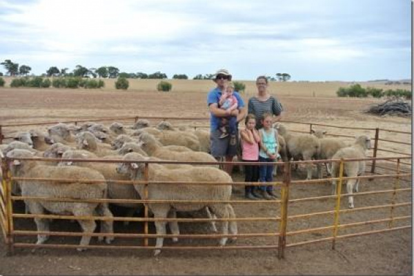 Third WAMMCO Win For Bunkin Lambs image