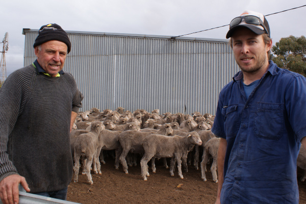 WINNING WITH MERINO MOTHERS image